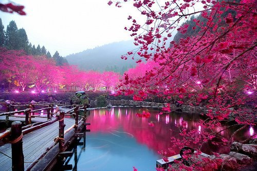 beautiful-photography-pink-water-favim-com-425916